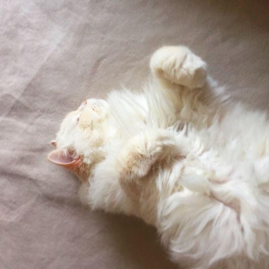 Always Be Cozy Like Sheep Heema Cat
