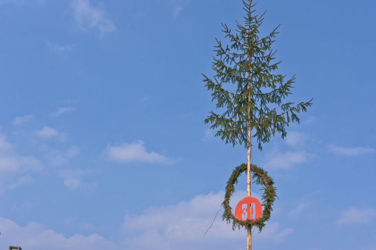 Low angle view of wreath with number 30 on tree against blue sky