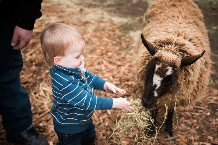 Animal Themes Blond Hair Childhood Day Farm Farm Life Feeding  Friendship Lifestyles Livestock Mammal Outdoors People Real People Sheep Standing Toddler  Togetherness