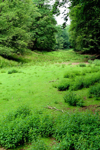 Green Color Grass Nature Growth Tree Beauty In Nature Freshness Green Color Backgrounds Wood Forest Valley Brudergrund Erbach Im Odenwald Wildpark