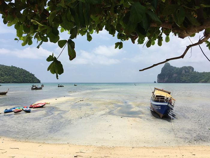 Just another room with a view😍😍😍 Sea Beach Beauty In Nature Nature Shore Thailand Phi Phi Phiphiisland Phi Phi Island Tropical Climate Tropical Paradise Sand Beachlife Nopeople Copy Space Tree Scenics Transportation Water Ademan