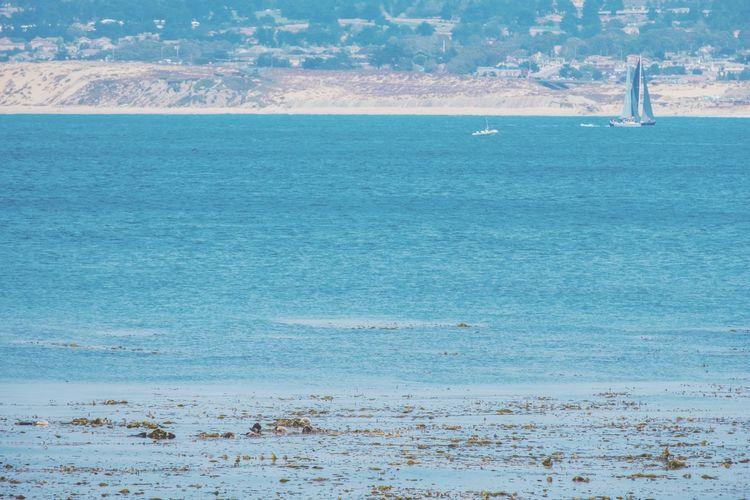 Sea Beach Water Blue Outdoors Backgrounds Sky Beauty In Nature Scenics Nature Otter SeaOtter Marine Life Monterrey California Xt20 Samyang12mmf2 Sailing Boat Beachphotography Mammal Animal Themes Fuji Beach