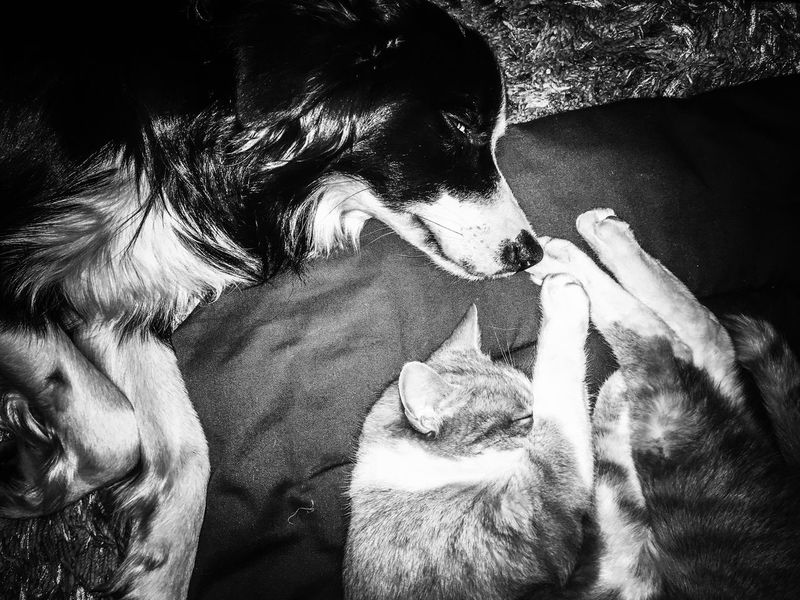 Hardlife Dogs Dogslife Dogs Of EyeEm Cat Lovers Cat And Dog Dog And Cat Dog And Cat Best Friends Blackandwhite Black And White Sleeping Telling Stories Differently