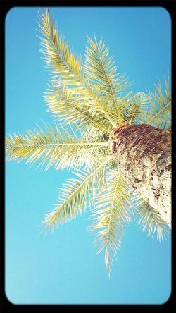 Just came off the beacho B-) Yo was durmiendo underneed the palmtreeoo
