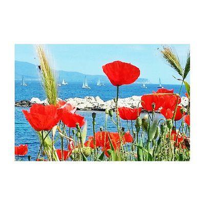 Espigues, roselles, el mar...Primavera Sensefiltres