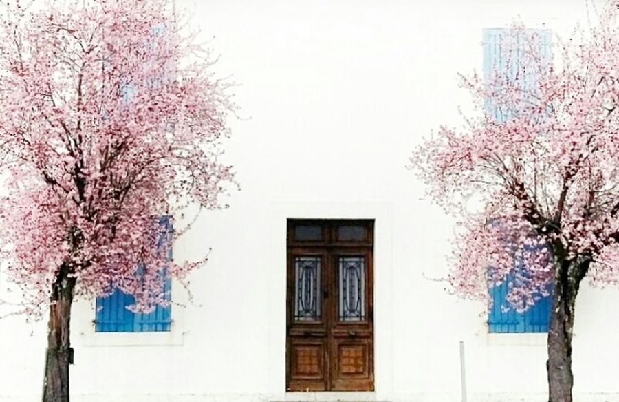 ça Sent Le Printemps 🌸🌸 Pink Flower Spring Cherryblossoms Cherry Tree Cherry Blue Lovelyday Eyemphotography Picoftheday Picofday France Colorsofspring