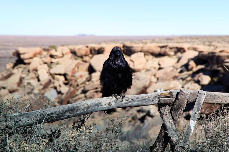 Bird perching on wood against sky