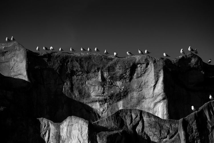 Low Angle View Of Birds Perching On Rock Formations