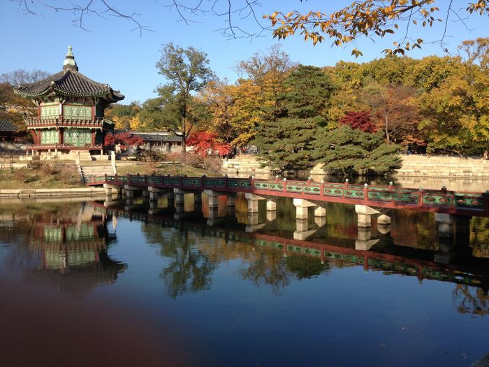 Autumn Colors Autumn Leaves Blue Water Blue Sky Canal Colorful Trees Korea Seoul, Korea Temple - Building Water Water Reflections