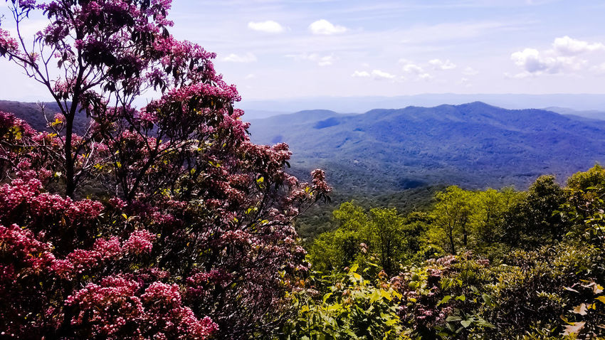 Pretty plants on the mountain side! Nature Mountain Growth Scenics Plant Day Sky Landscape Tranquility