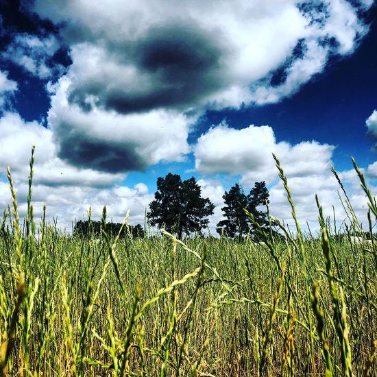Campos de Castilla y León en verano Plant Sky Cloud - Sky Growth Beauty In Nature Nature Field Scenics - Nature Tree EyeEmNewHere