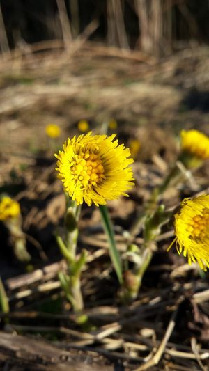 Весна, цветы.