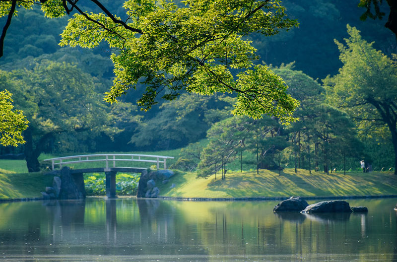 Scenic view in the Koishikawa Korakuen Garden Bridge Over Water Gardening Romantic Tokyo Architecture Beauty In Nature Bridge Connection Day Garden Green Color Lake Lake View Nature No People Oriental Oriental Design Oriental Style Outdoors Plant Reflection Scenics - Nature Tranquility Water Waterfront The Great Outdoors - 2018 EyeEm Awards