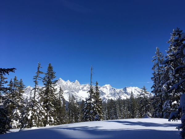 Panoramic Winter View on Dachstein Mountains Dachstein Hiking Roßbrand Scenic Skiing View Beauty In Nature Blue Clear Sky Cold Temperature Crosscountry Dachstein Glacier Filzmoos Forest Frozen Landscape Mountain Nature No People Scenics Sky Snow Tranquility Tree Winter Go Higher