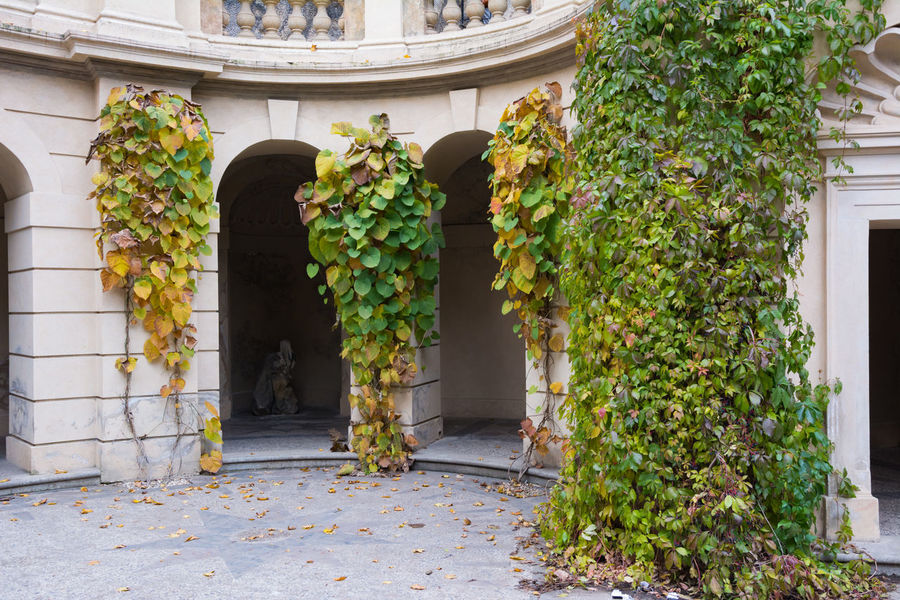 Architecture Autumn Autumn Colors Building Exterior Built Structure Czech Republic Day Door Entrance Grebovka Havlickovy Sady Horizontal House Ivy No People Outdoors Park Plant Prague Residential Building