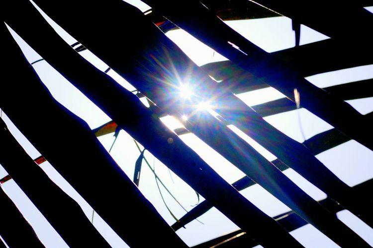 Low Angle View No People City Sky Under The Tree Sunlight Split Light Effect Light Rays EyeEm Selects Eyeem Market EyeEm Best Shots EyeEm Market 2017 EyeEmBestPics EyeEm Gallery EyeEmNewHere Coconutpalm at Bailahongal in India