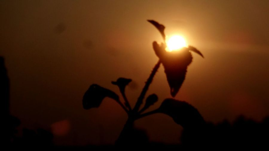 Sunrise Sunrise Over Flower Silhouette Flower No People Shadow Outdoors Sunset Close-up Beauty In Nature Flower Head Freshness Nature Sky Fragility Bird