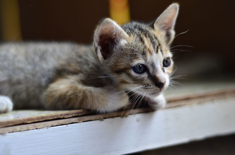 cat Animal Animal Eye Animal Head  Animal Themes Cat Cats Citty Cat Close-up Domestic Domestic Animals Domestic Cat Feline Focus On Foreground Kitten Looking Looking Away Mammal No People One Animal Pets Relaxation Tabby Vertebrate Whisker Wood - Material
