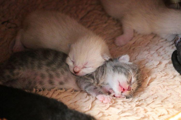two sleeping