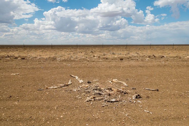 Dry bones in desert with cloudy sky Arid Climate Bleached Bones Clouds Desert Dry Outdoors Sand Sky Summer