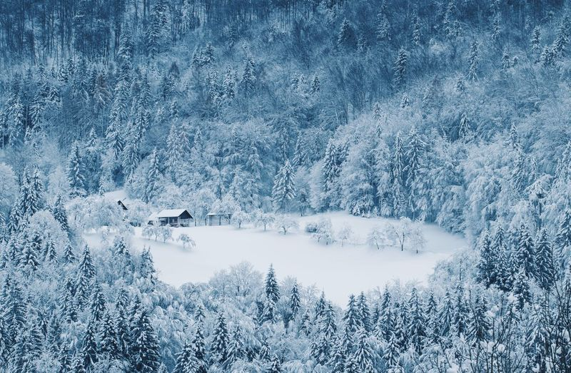 Slovenia Wintertime Beauty In Nature Cold Temperature Forest Frozen Landscape Mountain Nature Nature_collection Nature_perfection Naturelovers Scenics Snow Tranquil Scene Tranquility Tree Winter Winter Trees Winter Wonderland Winter_collection
