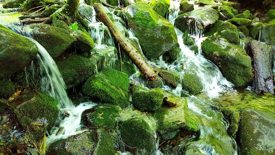 Moss & Lichen Moss Growth Stream Moss On Rock Wood Nature Beauty In Nature Serenity Relaxation Peace Non Urban Scene Surfaces And Textures Water And Moss Flowing Hidden Waterfall Great Smoky Mountains  North Carolina