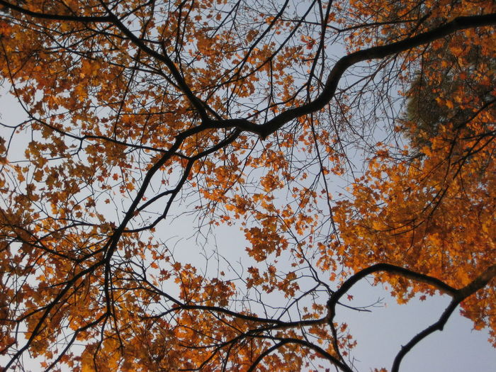 Countryside Iwate Japan Tohoku Tono 岩手 東北 遠野 Colored Leaves Trees