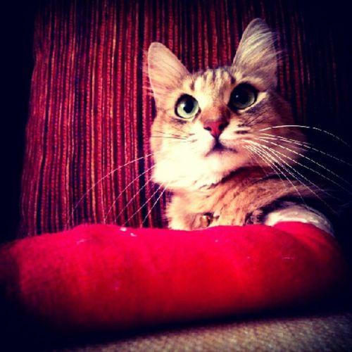 Pettaksi ,Catsofinstagram ,Petsofinstagram ,Instacat ,cats,pets,50likes,pussycat,idkwhatothertagishoulduse,bestof,petstagram,missingcandy,bojangles,kitty,castagram,cat,meow,tc, gato,kitten,neko,beautiful,cute,love,sweet,random,catlover,funny