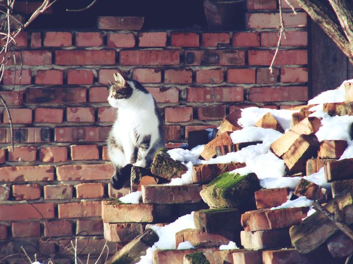 Animal Themes Architecture Awareness Brick Wall Capture The Moment Cat Cat Lovers Cats Cats Of EyeEm Cat♡ Day Domestic Animals Domestic Cat Mammal Nature No People One Animal Outdoors Pets