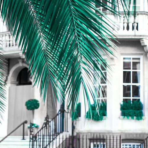 Ever green Palm City View  Grey Day London EyeEm Selects City Tree Window Architecture Building Exterior Built Structure Green Color Close-up