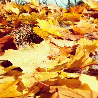 Vscobest Vscolovers Vscocam Vscostyle vscogood vsco autumn alya leaves yellow nature new follow forest today trees outside photo