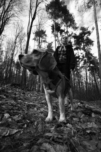 Animal Themes B&w Beagle Day Dog Dog & Me Domestic Animals Forest Full Length Mammal Man With Dog Nature One Animal One Person Outdoors People Pets Tree Pet Portraits