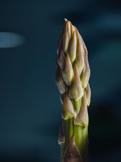 Close up of a asparagus against dark background