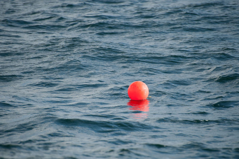 Red floating on sea