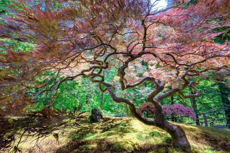Tree Plant Beauty In Nature Growth Nature Tranquility Branch Day Tranquil Scene Scenics - Nature No People Environment Forest Land Outdoors Springtime Flower Park Tree Trunk Flowering Plant Cherry Blossom Tree Canopy