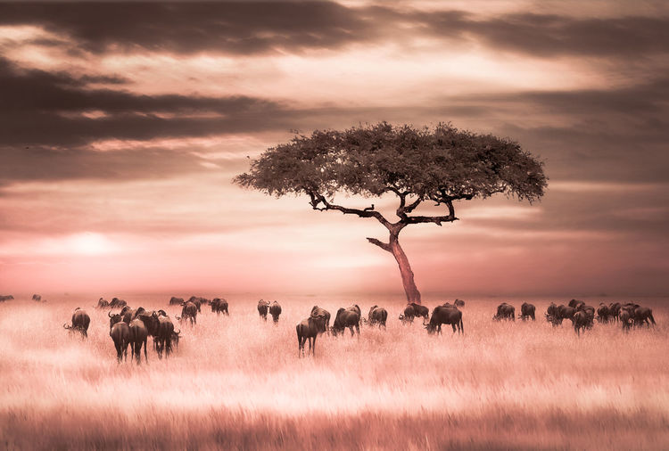 Tree and group of animals on field against sky during sunset