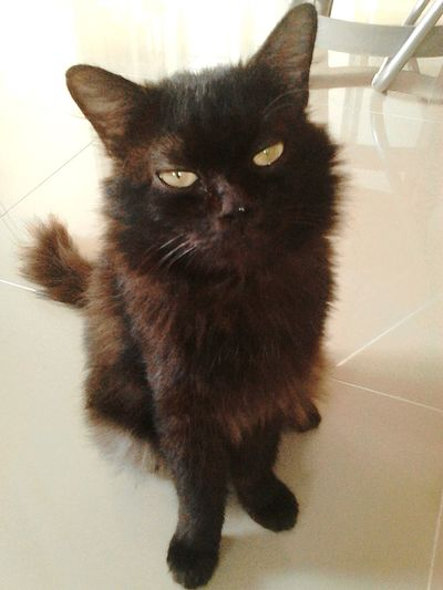 Rambo... my Cat♡ Notes From The Underground Check This Out