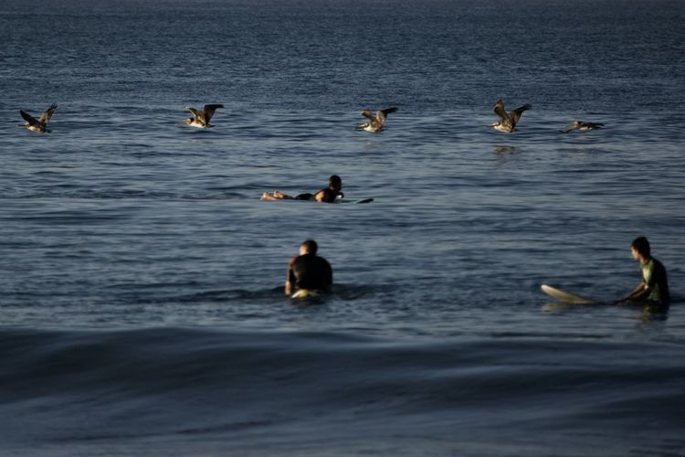 Group Of Animals Water Animal Wildlife Animal Themes Animals In The Wild Bird Animal Waterfront Vertebrate Swimming Nature No People Beauty In Nature Sea Large Group Of Animals Day Motion Outdoors Flock Of Birds