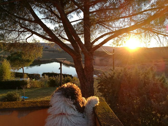 Il mio cane che contemla il tramonto. Sunset Sky Reflection Nature Water Beauty In Nature No People Rural Scene Nature Pets One Animal Dog Domestic Animals Animal Themes Gelo. Tristezza. Morte. Bellezza.
