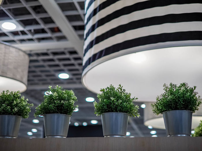 Plant Potted Plant Growth Architecture Built Structure No People Nature Striped Focus On Foreground Close-up Day Indoors  Green Color Low Angle View In A Row Flower Pot Building Side By Side Potted Plants Indoors