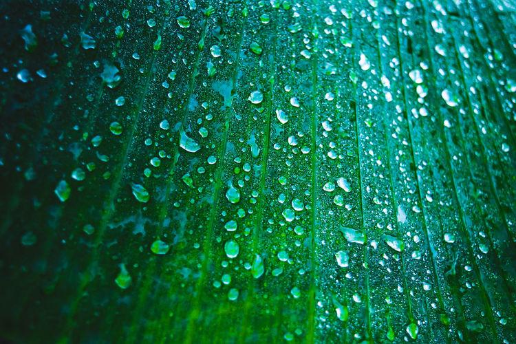 Backgrounds Beauty In Nature Close-up Day Dew Drop Fragility Freshness Full Frame Green Color Growth Leaf Leaves Nature No People Outdoors Plant Purity Rain RainDrop Rainy Season Water Wet