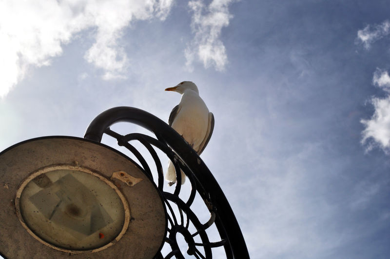 Low angle view of bird perching on metal against sky