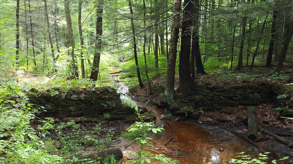Historical Place Old Ruins Oldmill Trees Wildlife & Nature Outdoor Photography Maine Mainewilderness Beautiful Nature Runningwater