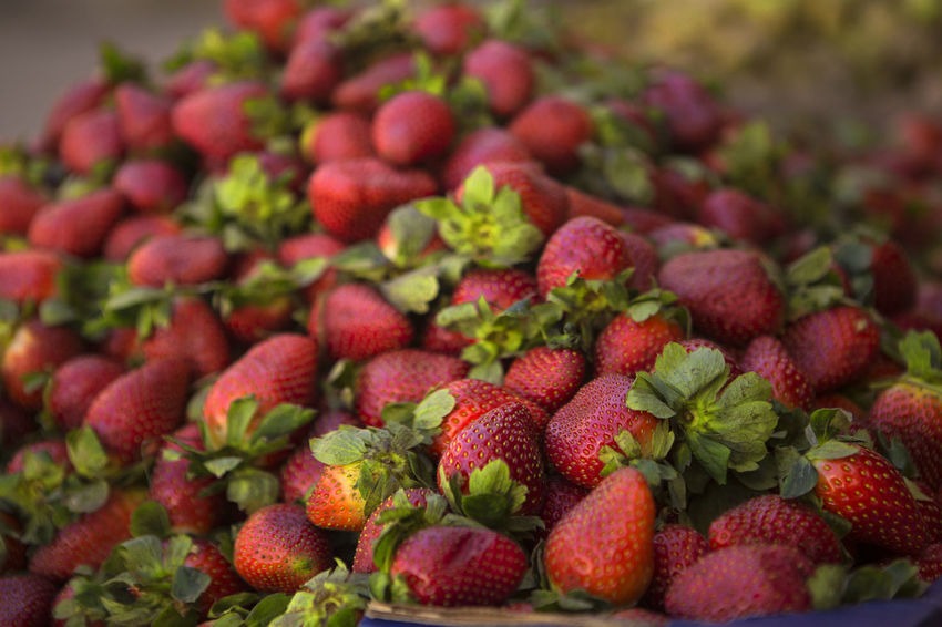 EyeEmNewHere EyeEm Best Shots A Whole Bunch Of Strawberries Abundance Berry Fruit Close-up Day Focus On Foreground Food Food And Drink Freshness Fruit Fruit Market Healthy Eating Heap Large Group Of Objects No People Organic Pile Of Strawberries Red Red And Green Colours Ripe Selective Focus Strawberries Strawberry Wellbeing