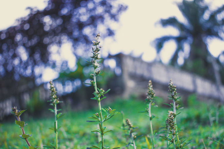 Plant Growth Nature Beauty In Nature No People Focus On Foreground Tree Tranquility Day Green Color Land Close-up Selective Focus Outdoors Field Flowering Plant Flower Tranquil Scene Sunlight Vulnerability