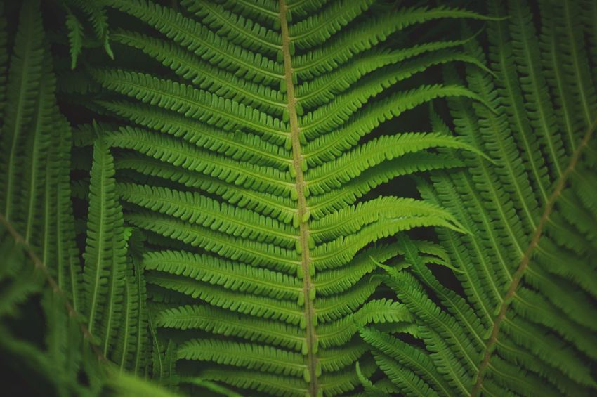 Fern Beauty In Nature Green Color Fern Growth Leaf Plant Part Plant Beauty In Nature Natural Pattern Full Frame Day Close-up Nature No People Backgrounds Freshness Outdoors Pattern Lush Foliage Botany
