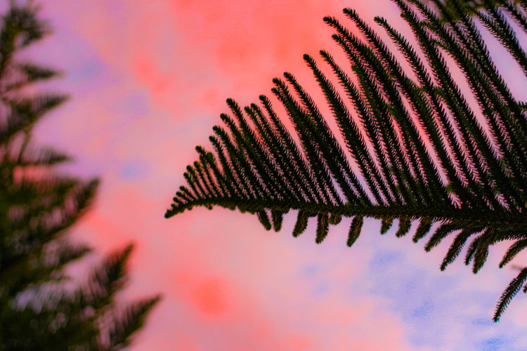Low angle view of leaves against sky during sunset