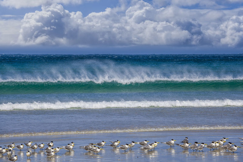 Flock of birds perching on shore at beach against sky