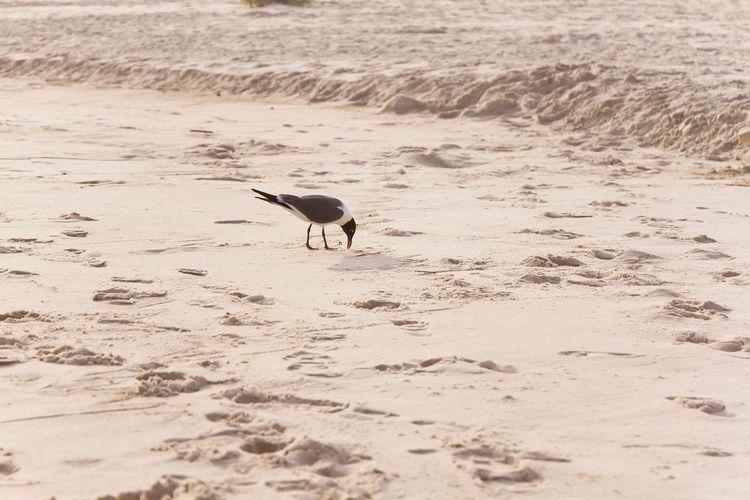 Bird on beach Wildlife Beach Bird One Animal Sand Beach Nature Animal Wildlife Animal Themes Animals In The Wild No People Outdoors Day Sea Water