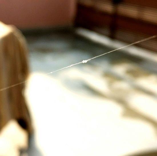 Cobweb Spider Web Day No People Close-up Outdoors EyeEm Gwalior Amazing_captures Madhyapradesh Eyemgallery Ashishdoorwar96 Ashish Doorwar EyeEm Best Shots
